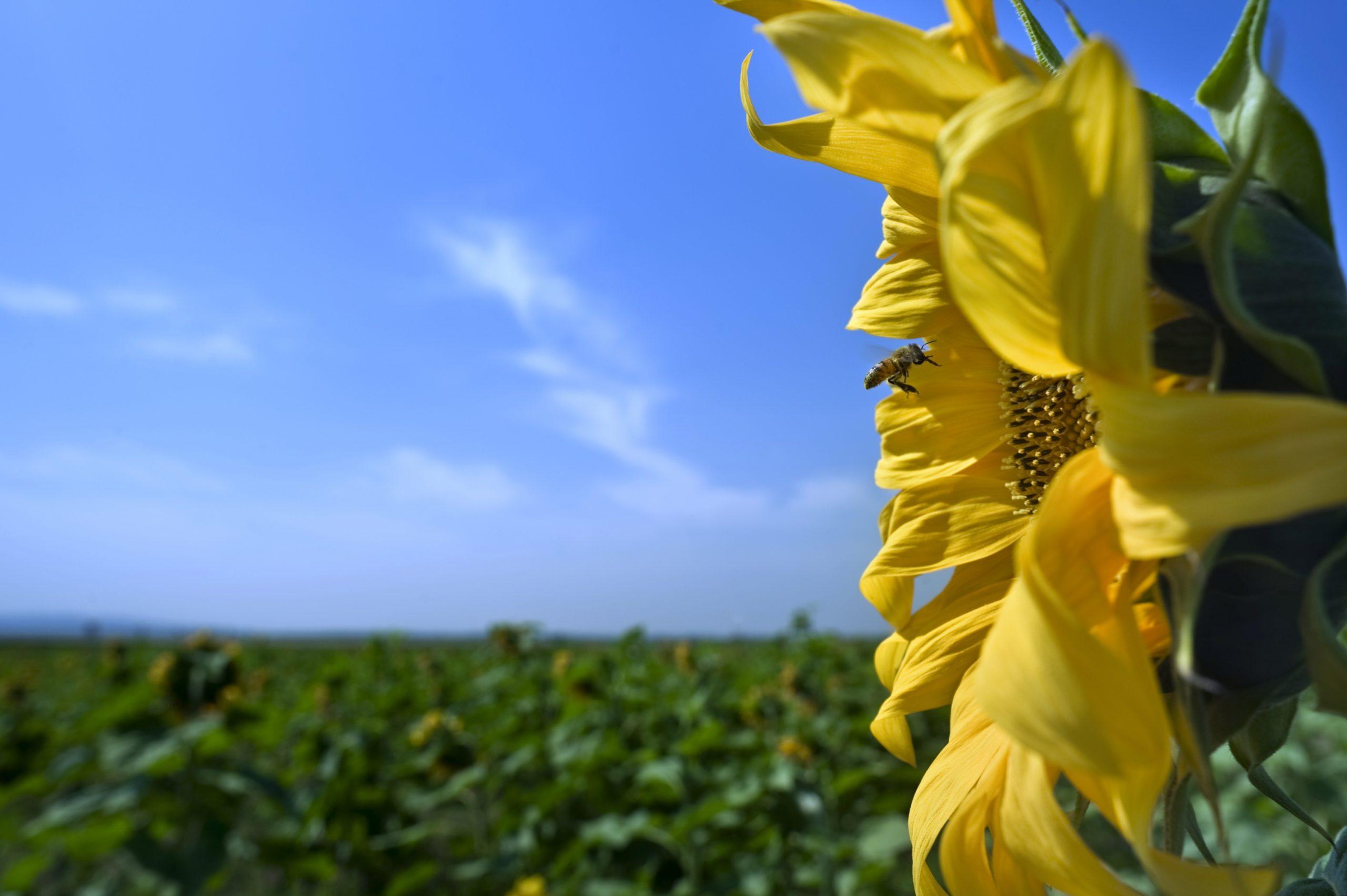 Pollinators in Agriculture